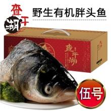伍号-查干湖野生有机胖头鱼提货券
